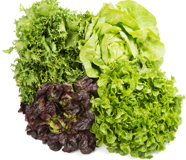 Der Kopf-/Blattsalat, die Seele eines jeden Salats