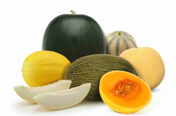Die Melone, im sombre unentbehrlich